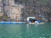 Schwimmendes Haus in der Halong Bay