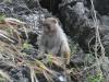Affe in der Halong Bucht