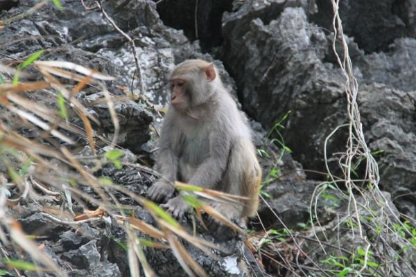 Fauna Vietnams