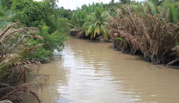 Mangrovenwald in Ca Mau