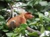 Tierbeobachtungen in Vietnam